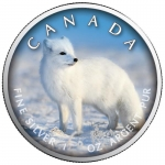 1 Oz Silber Maple Leaf Farbe 2021 On the Trails of Wildlife (2) - Polarfuchs Kanada